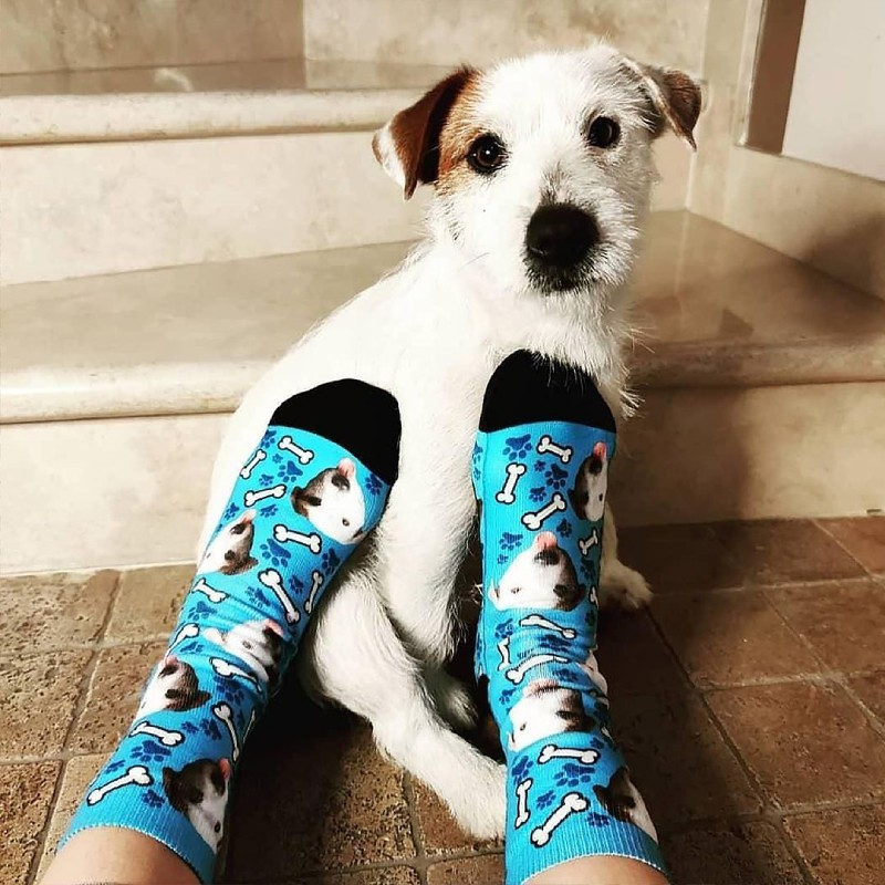 socks with dog